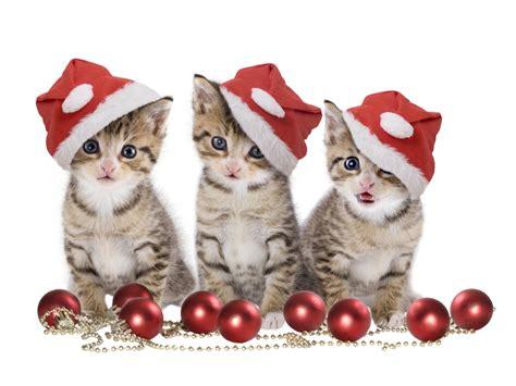 keeping pets safe  holiday season village cat clinic
