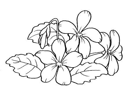 fiori da disegnare disegni fiori maestra