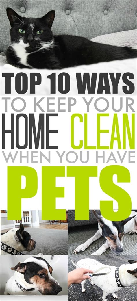 good tips on how to keep your house clean trusper top ten ways to keep your home clean when you have pets