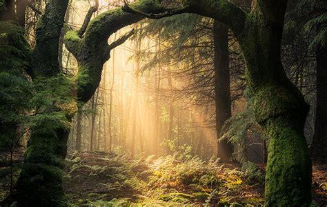 walk   woods tranquility beauty
