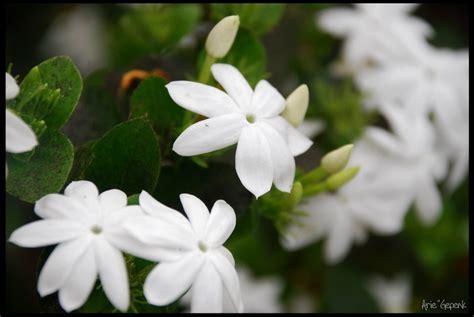 dmndflorist heaven sweet flowers laman 4