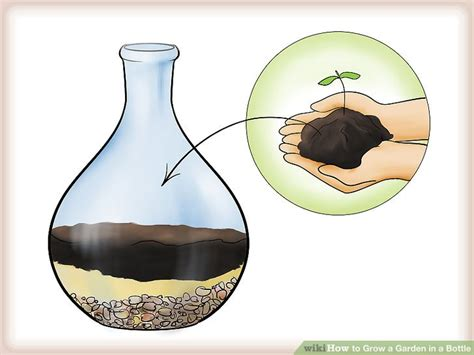 garden in a bottle how to grow a garden in a bottle 6 steps with pictures