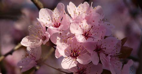 komunitas bunga gambar bunga cantik