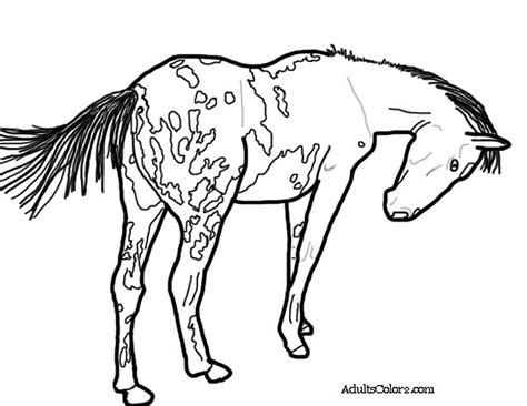 coloring pages of appaloosa horses coloring pages and print your pony