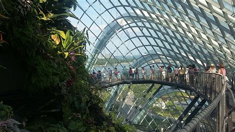 Dome Flowers singapore flower dome and the cloud forest archian