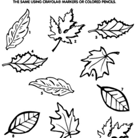 hickory tree coloring page trees without leaves coloring pages fall leaf happy tree