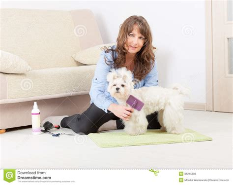 grooming at home grooming at home royalty free stock image image 31245806