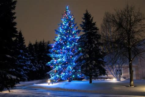 outdoor tree wraps the christmas light guys