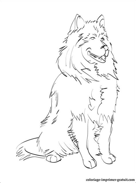 coloring pages of sheep dogs coloriage spitz allemand a colorier coloriage 224 imprimer