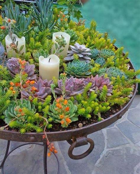 succulant planter creative indoor and outdoor succulent garden ideas