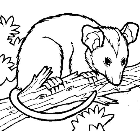 printable possum mask possum coloring pages getcoloringpages com
