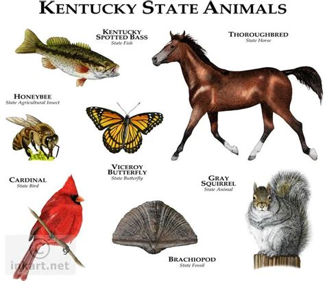 of kentucky colors kentucky state kentucky state animals color