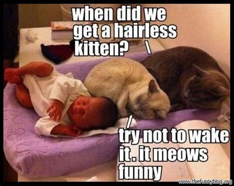Hairless Cat Meme - hairless kitten megalawlz com