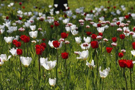 Britzer Garten Tulipan 2018 by Tulipan Im Britzer Garten Home Of Robert Sperling