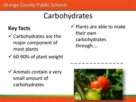 carbohydrates 5 facts nutrition westside tech