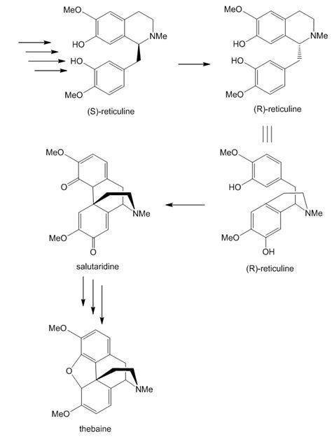 Hydrocodone Sysnthesis hydrocodone sysnthesis apamonitor x fc2
