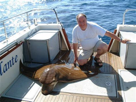 types of fishing boat uk fishing info torrevieja types fish you catch torrevieja