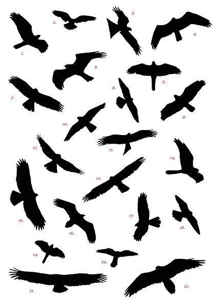 black bird tattoo amazing black bird collection tattooshunt