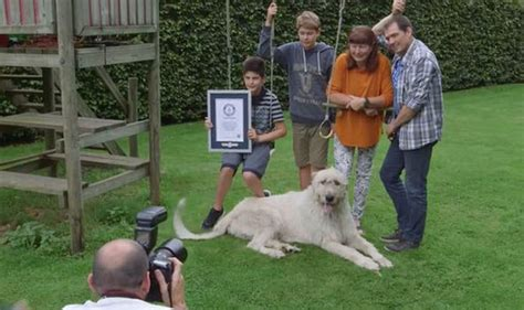 pug world records guinness world record with the nature news express co uk