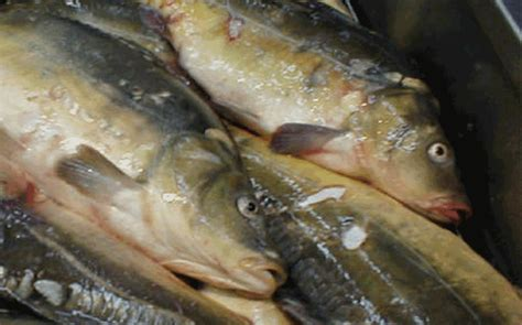 dubai municipality food control section majority of dubai fish and meat shops violate rules