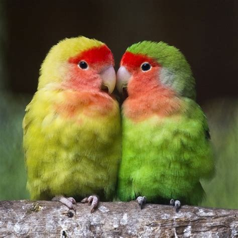 imagenes de love birds exotic birds at el nido aviary popsugar pets