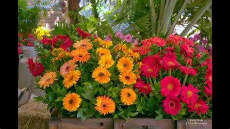 imagenes de rosas maravillosas las maravillosas flores youtube