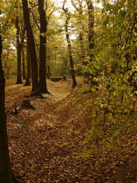 belfairs woods hadligh great wood grows