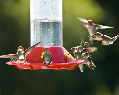 how to clean a hummingbird feeder step 1
