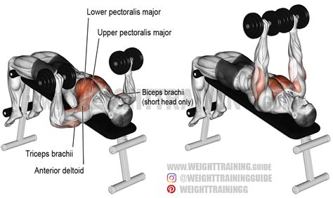 bench press with dumbbell decline dumbbell bench press exercise instructions and video