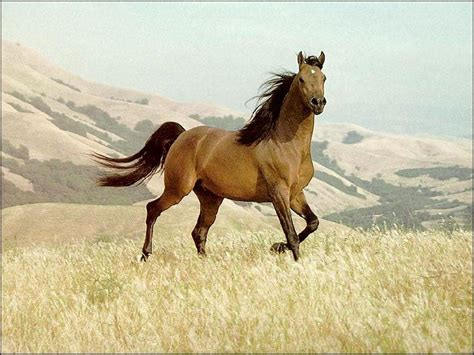 google images horses brown horse google zoeken we heart it horse