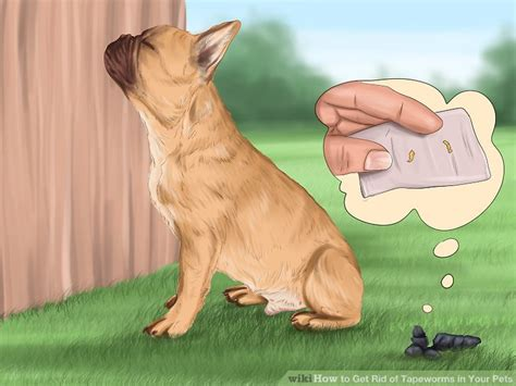 how to get rid of tapeworms in dogs how to get rid of tapeworms in your pets 12 steps with pictures