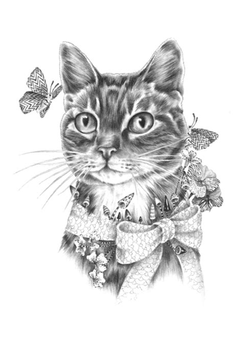 cat and drawing cat drawing pictures photos and images for and