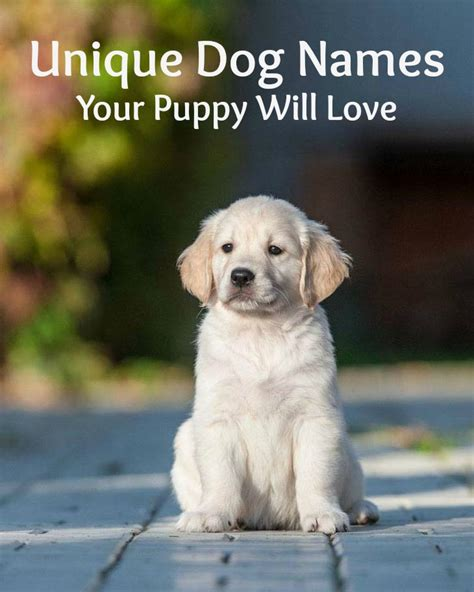 8 Unique Names For Your Pet by Unique Names Puppy Names For Your Boy