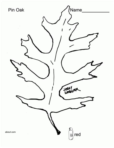 leaf identification coloring pages printable pictures of leaves coloring home