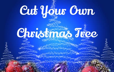 cut your own christmas tree chicago il