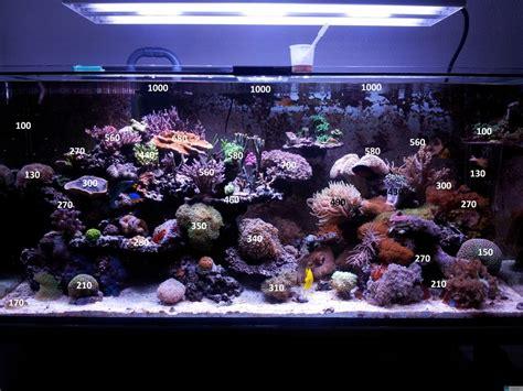 beleuchtung aquarium t5 pretty aquarium beleuchtung t5 images gt gt aquarium