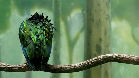 Wallpaper Green With Birds | green colored bird wallpapers hd wallpapers id 6464