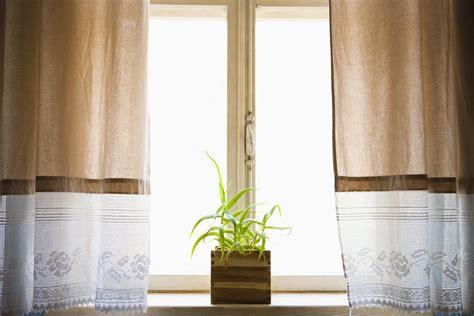 determine sunlight levels  houseplants