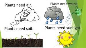 plants that need sunlight natural science unit 6 plants