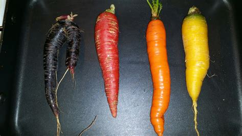 different colored carrots a guide to different colored carrots countryside network