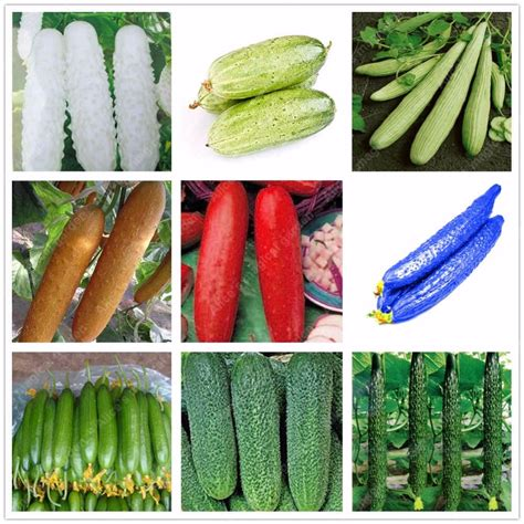 new year 7 vegetables 2017 sale 100 pcs cucumber seeds 9 varieties green
