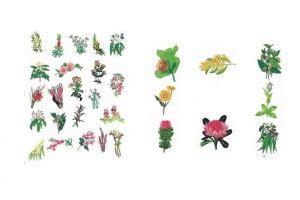 fiori californiani elenco fiori californiani elenco altrasalute