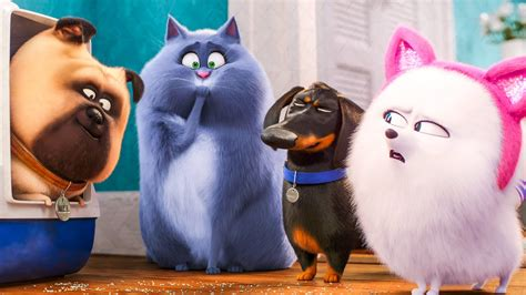 purr fectly hilarious  trailer  landed