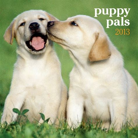 puppy pals show 17 best images about thelma s best friends on wall calendars spaniels and