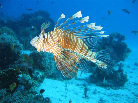 imagenes de señas vulgares criaturas abissais os monstros que v 234 m do fundo do mar