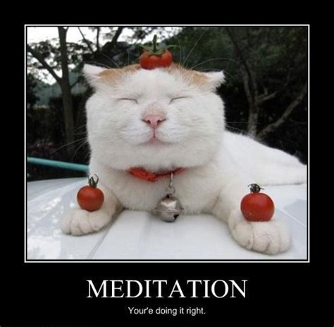 Funny Photo Memes - meditation cat www slapcaption com meditation cat by
