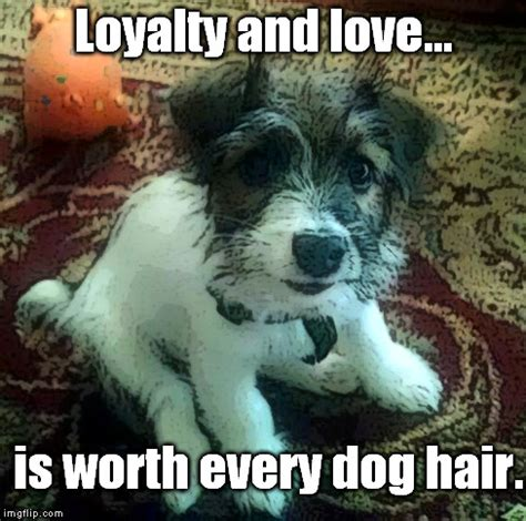 Loyalty Meme - loyalty and love imgflip