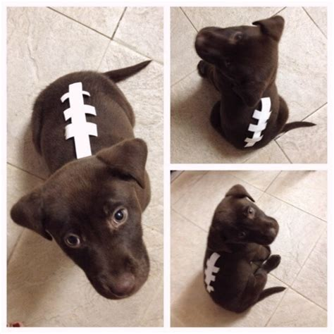 puppy football a on pet health nutrition and tips homes alive pets 20 creative