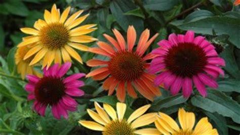 piante bellissime da giardino 10 piante da giardino come scegliere quelle giuste
