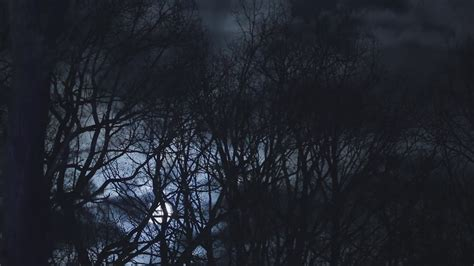 horror background horror background with woods spooky tree and moon